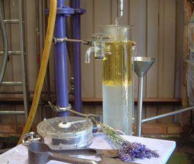 Généralités sur les huiles essentielles