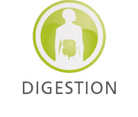 Huile essentielle catégorie Digestion