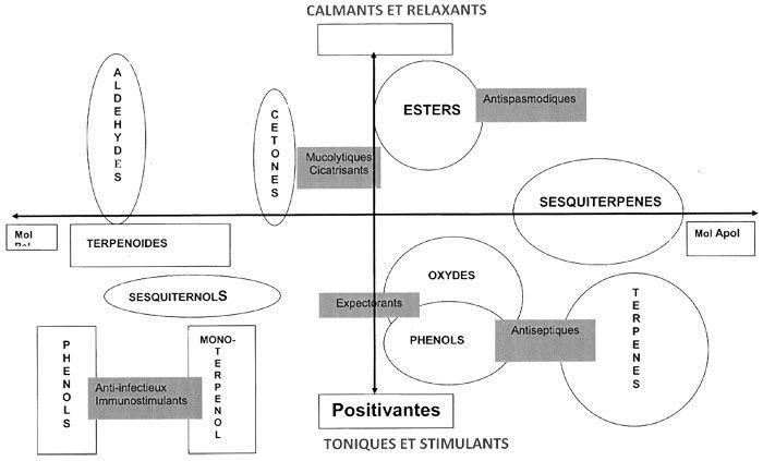 Schéma structure/activités des huiles essentielles
