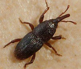 Insectes de nos maisons penntybio - Insecte dans les maisons ...