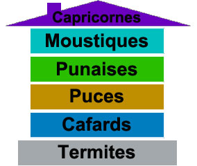 Insectes de nos maisons, fiches détaillées