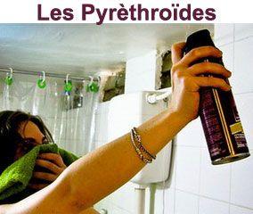 Les pyrethrinoïdes