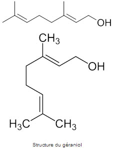 Structure chimique du géraniol