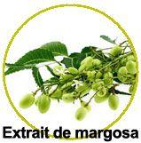 Extrait de Margosa - Azadirachta indica