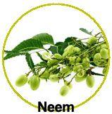 Actifs le Neem