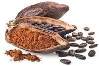 Beurre de cacao issu des fèves du cacaoyer