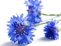 Fleurs de Bleuet bio