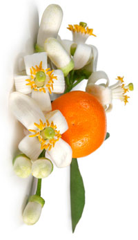 Fleurs d'oranger bio