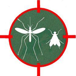 Spirale cible moustiques et insectes volants